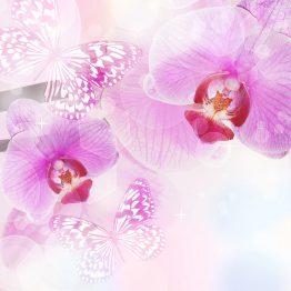 tranh-dan-tuong-hoa-4985